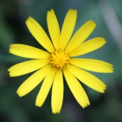 161014-mellow-yellow-6
