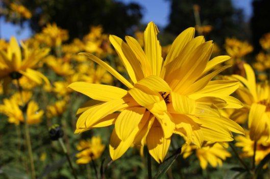 161014-mellow-yellow-7