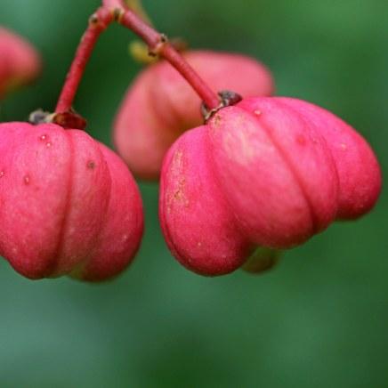 161018-berries-2