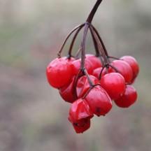 161018-berries-4