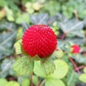 161018-berries-9
