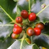 161029-berries-2