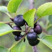 161029-berries-6