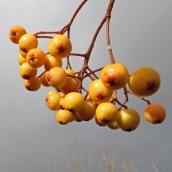 161029-berries-9