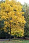161101-golden-autumn-12