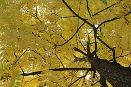 161101-golden-autumn-2