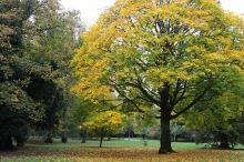 161101-golden-autumn-8