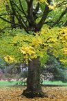 161101-golden-autumn-9