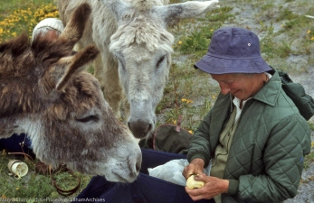 Donkeys help Nance James peel an apple, Aran