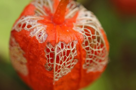lanterns-4-halloween-4