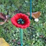 161111-poppies-2