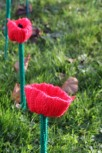161111-poppies-3