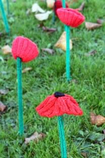 161111-poppies-5
