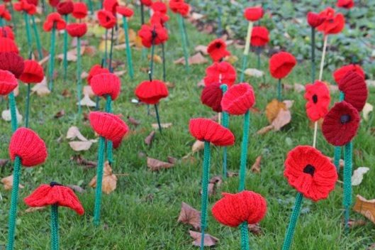 161111-poppies-7