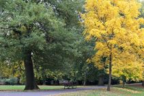 161113-roath-park-autumn-2