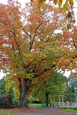 161113-roath-park-autumn-3