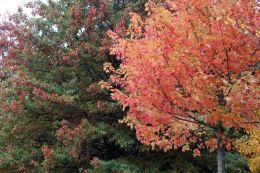 161113-roath-park-autumn-4