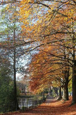 161113-roath-park-autumn-5