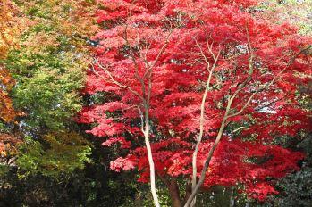 161113-roath-park-autumn-9