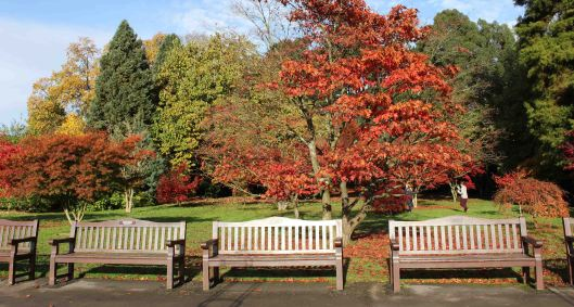 161113-roath-park-autumn