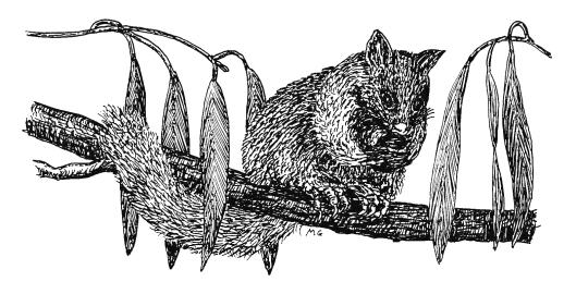 161114-possum