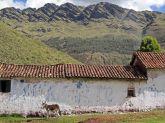 161116-donkeys-peru-1
