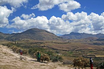 161116-donkeys-peru-4