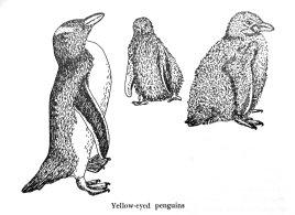161126-gillham-penguins