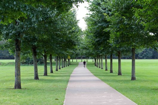 161128-pontcanna-trees-1-summer
