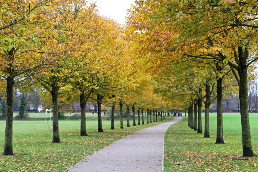 161128-pontcanna-trees-2-autumn