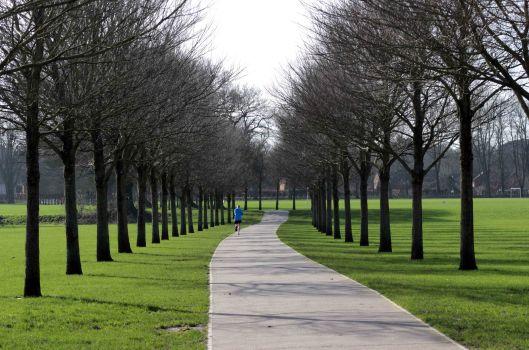 161128-pontcanna-trees-3-winter