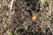 161201-kingfisher