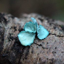 green-elfcup-2