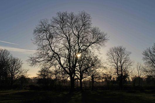 161204d-riverside-trees