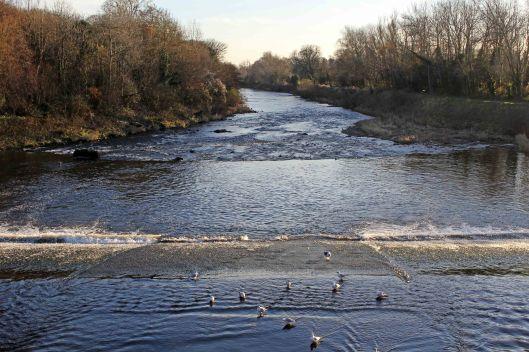 161204g-river-taff-from-blackweir-bridge