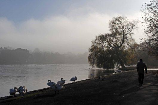 161220-fog-2