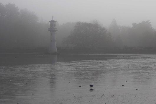 161220-fog-5