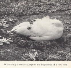 161224-mary-gillham-albatross-photo-3