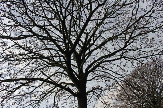 170114-skeleton-tree