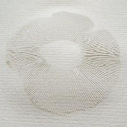 170129-spore-print-tricholoma-fulvum
