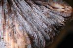 170217-fungi-on-fungi-5