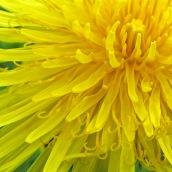 170305-yellow-11