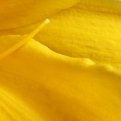 170305-yellow-3
