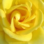 170305-yellow-9