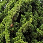 170317 green 3 fir