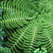 170317 green 5 fern nz