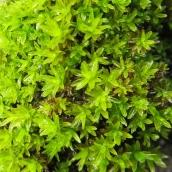 170317 green 9 moss