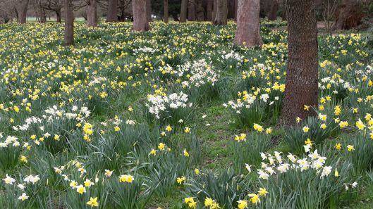 170318 Spring in Bute Park (1)