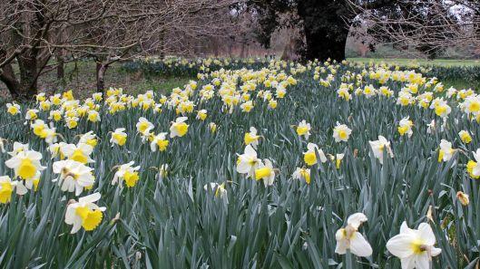 170318 Spring in Bute Park (3)