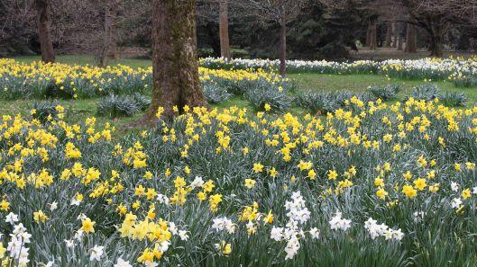 170318 Spring in Bute Park (6)